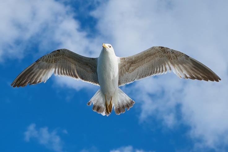 seagull-1511862_960_720 (1)
